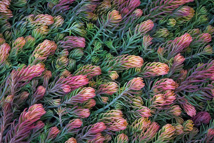 Макросъемка растений - Советы
