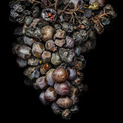 Peter Lippmann – Noble?Rot