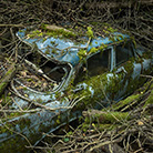 Peter Lippmann – Paradise parking