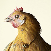 Peter Lippmann – Luxury chicks