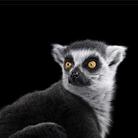 Портреты животных - Фотограф Брэд Уилсон (Brad Wilson)