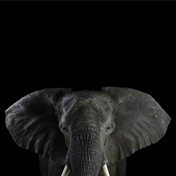 Слон - Портреты животных - Фотограф Брэд Уилсон (Brad Wilson)